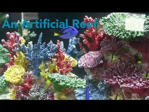 How To Set Up An Artificial Reef Fincasters Episode 79