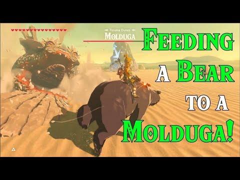 FEEDING a Bear to a Molduga! Bear of the Wild in Zelda Breath of the Wild