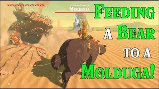 FEEDING a Bear to a Molduga! Bear of the Wild in Zelda Breath of the Wild