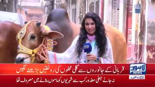 Eid-ul-Adha on way: Citizens begin to buy animals from cattle markets