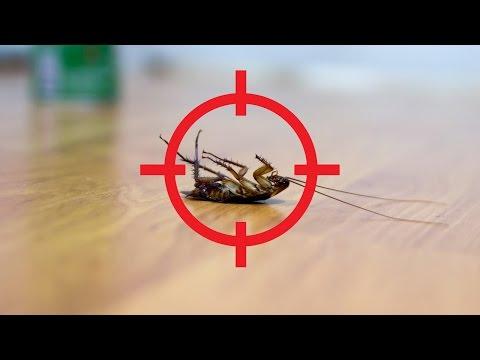 5 Herbs That Keep Bugs Away