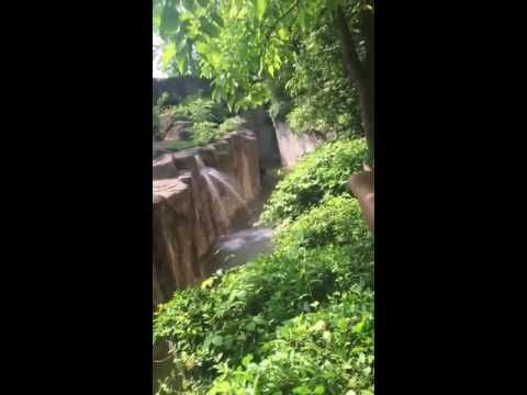 Copy of Cincinnati zoo kills gorilla to save boy who fell into enclosure HD Original