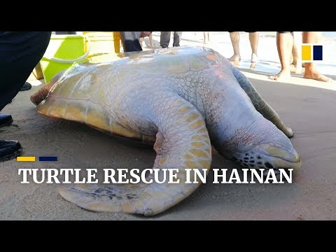 Stranded sea turtle rescued in Hainan, south China