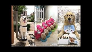 It's Funny Time 2018 ♥ Funny Animals Doing Funny Things