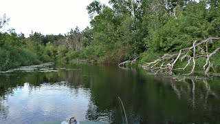 ЧУМНЫЕ ПОКЛЁВКИ Ух и прёт Рыбалка в глуши среди коряг и травы Ловля на спиннинг