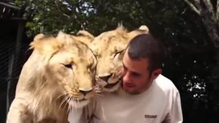 Любовь животных не знает границ/Интересные видео с животными 2016
