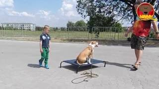Draco - pies z charakterem