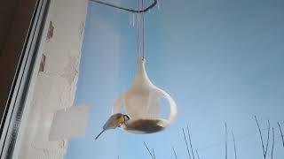 Распечатанная на 3D принтере кормушка для птиц