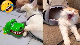 The Best Funny Cat Videos Of The 2021 That Will Make You Laugh 😂😹
