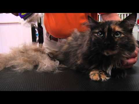 FURminator Cat deShedding - Spot