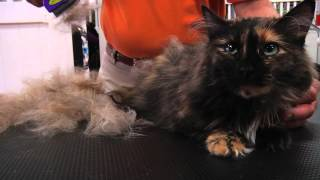 FURminator Cat deShedding - Spot