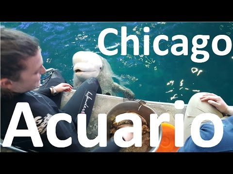 Acuario De Chicago Shedd Aquarium CityPASS Chicago
