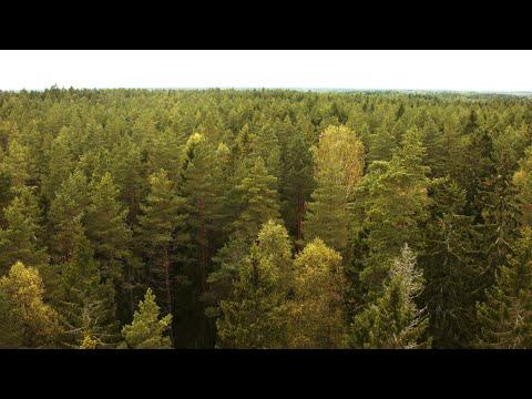 1792. Bakåt över skog (Forest) Drone Stock Footage Video