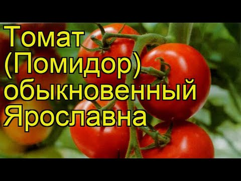 Томат обыкновенный Ярославна. Краткий обзор, описание характеристик, где купить саженцы Iaroslavna