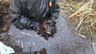 Ищем без вести пропавших солдат, раскопки в глубоком болоте на металлоискатель и магнит