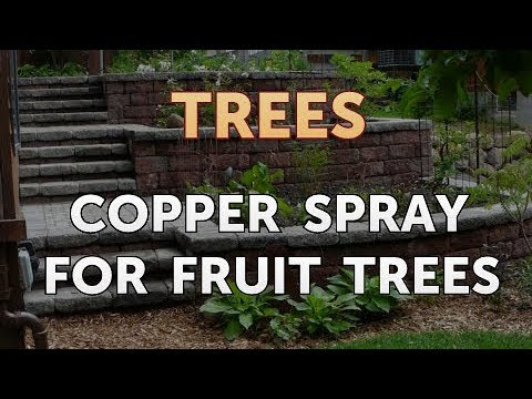 Copper Spray for Fruit Trees