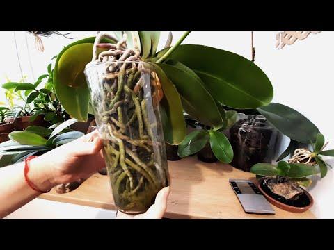 Орхидеи без субстрата 2 (ответы на вопросы)