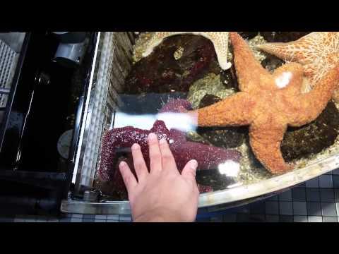 Atlanta Vlog part 2 | Aquarium and World of Coca Cola