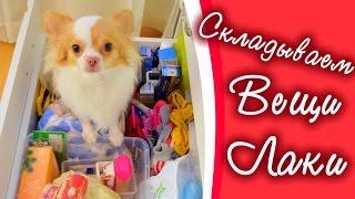 Складываем Вещи Лаки || Органайзер для щенка