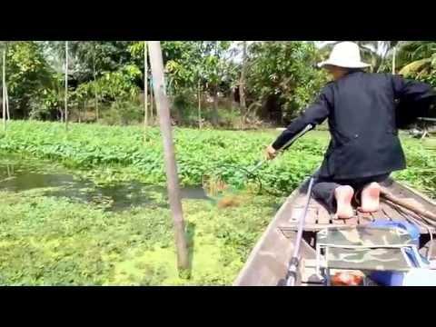 ตกปลาช่อน สนุกๆแม่น้ำท่าจีน