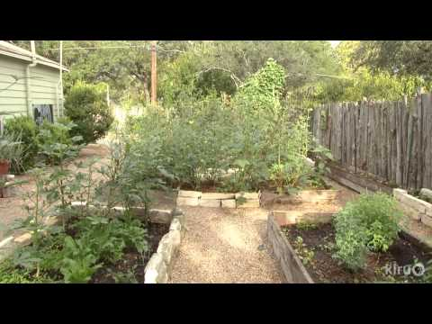 Turn lawn into food on a budgetMeredith ThomasCentral Texas Gardener