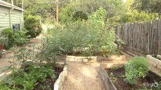 Turn lawn into food on a budget|Meredith Thomas|Central Texas Gardener