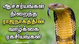 ராஜநாகங்களின் விசித்திரமான வாழ்க்கை ரகசியங்கள் | Rajanagam history in Tamil | Bioscope