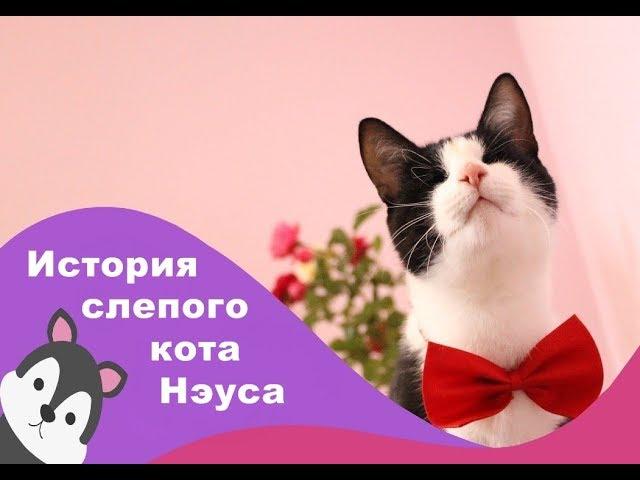 Слепой кот, который потерял зрение, но не волю к жизни.