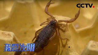 《我爱发明》 20201104 蝎子安全屋|CCTV农业 - YouTube