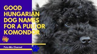 Good Hungarian Dog Names for a Puli or Komondor