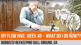 My Flow Hive: Week 48 - So What Do I Do Now?