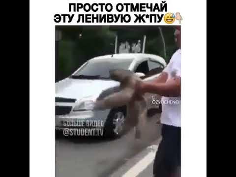 Ленивец на дороге (озвучка)