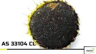 Гибрид подсолнечника AS 33104 CL