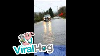 Watch Out for the Salmon Crossing the Road || ViralHog