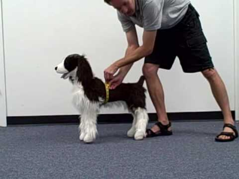 Measuring Your Dog For A Thundershirt Youtube