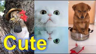 귀여운 동물들, 반려동물, 애완동물. Cute & lo…