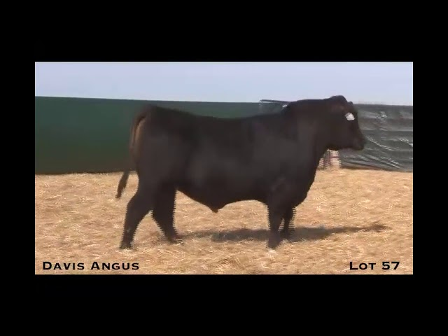 Davis Angus Lot 57