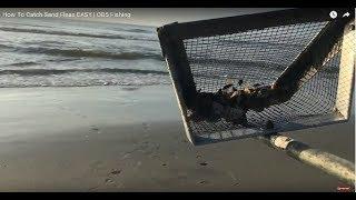 How To Catch Sand Fleas | OD5 Fishing