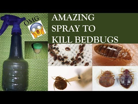 Proof How To Get Rid Of Bed Bugs In 24 Hours Guaranteed