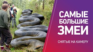 Каких размеров бывают змеи: интересно и познавательно.