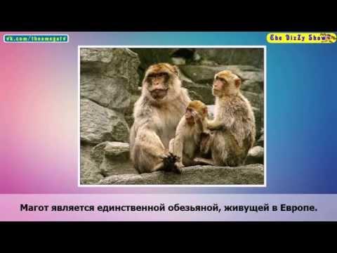 Евпатория в августе отдых и погода в Евпатории