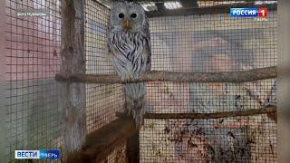 В Тверской области совы бьются о стены домов и автомобили