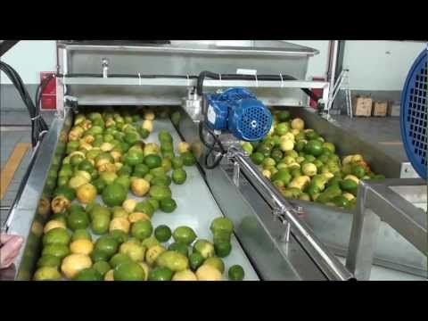 Lemon oil and juice extraction .wmv