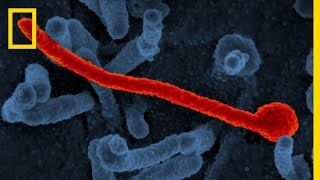 Ebola 101 | National Geographic