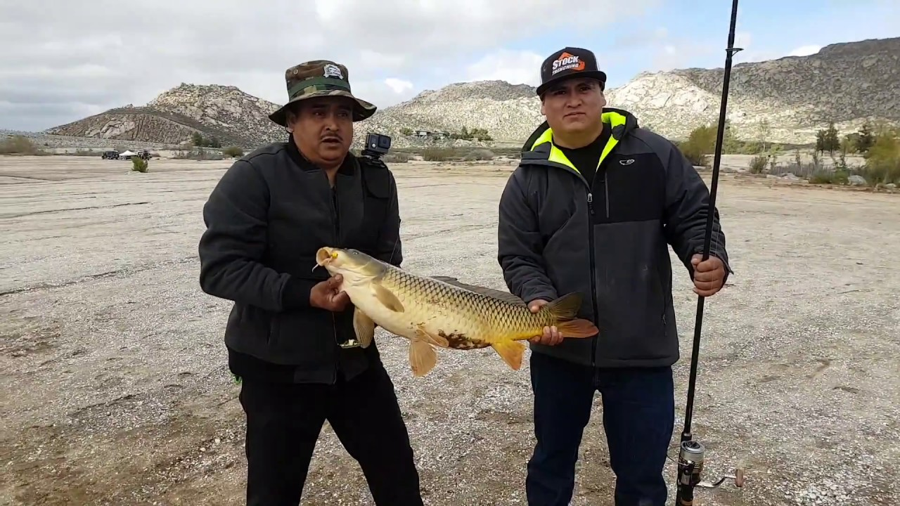 Lake perris fishing for big carp pescando en el lago for Lake perris fishing report