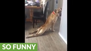 "Dog appears to be ""stretching"" his back legs"