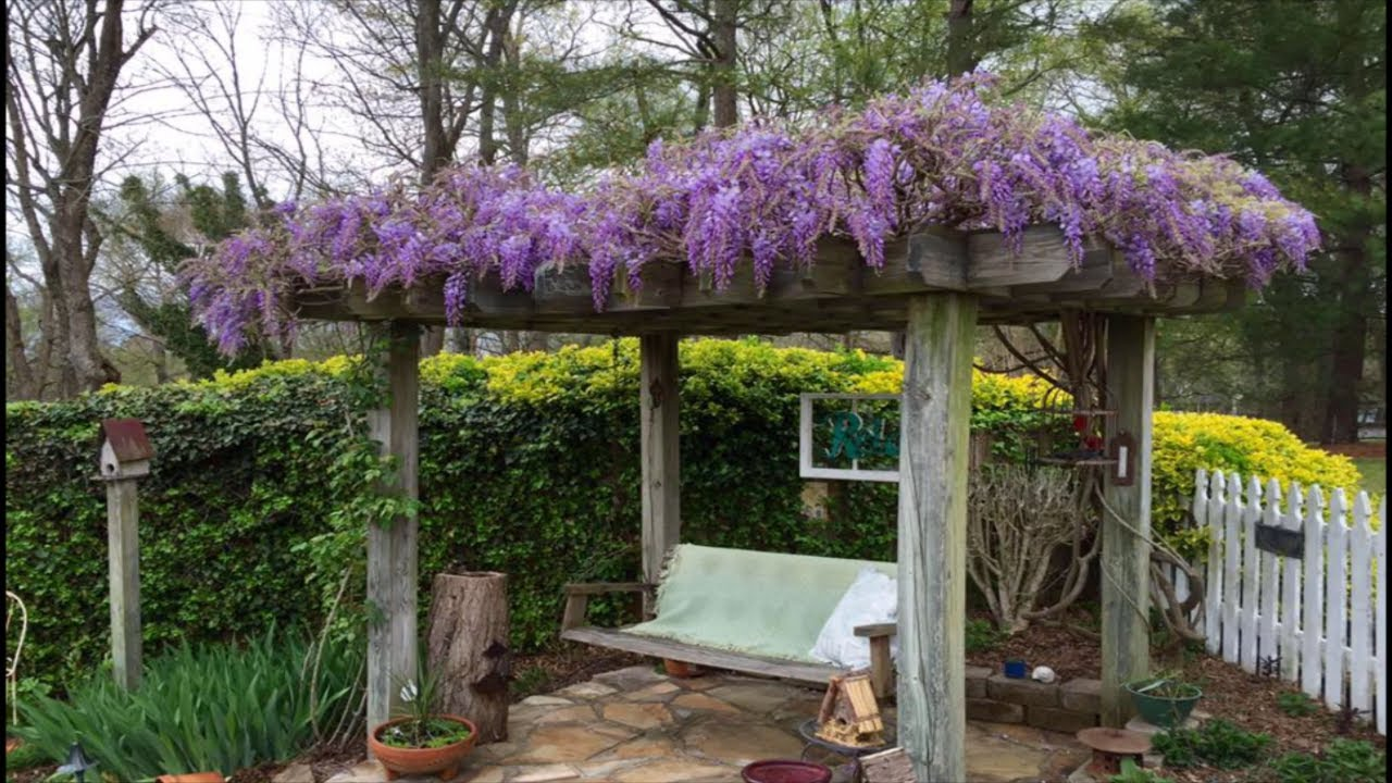 Training Wisteria On a Pergola & A 2 Year UPDATE On One Grown From Bareroot ~ EP 110
