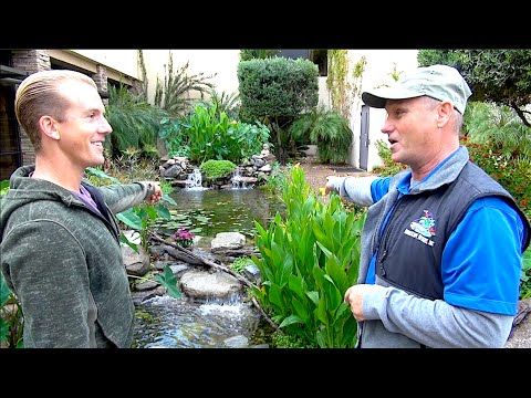 Rainwater Powered Backyard Koi Pond - Amazing!