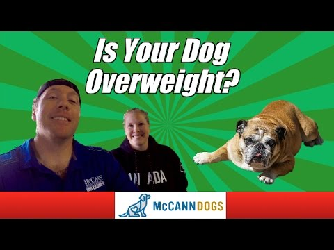 How To Help Your Dog Lose Weight Safely