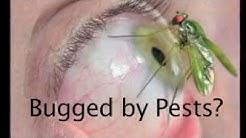 Pest Control Wickenburg Az